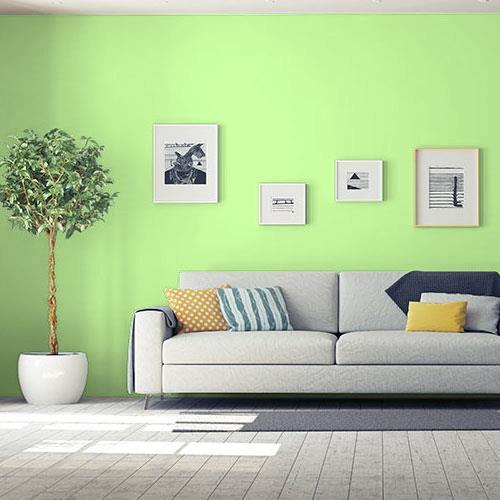 zielony kiwi